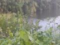 鎌倉橋を流れる井野川